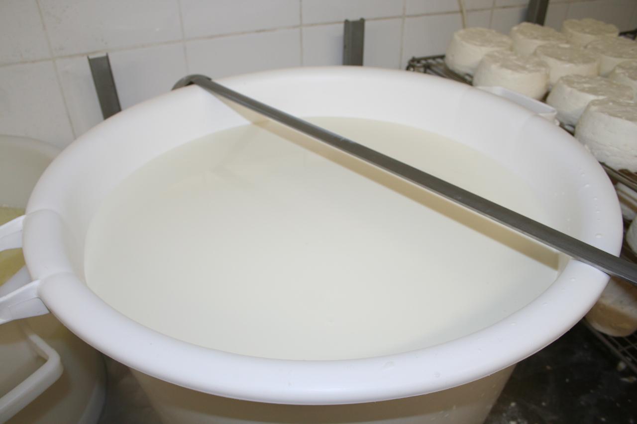 Bassine de lait