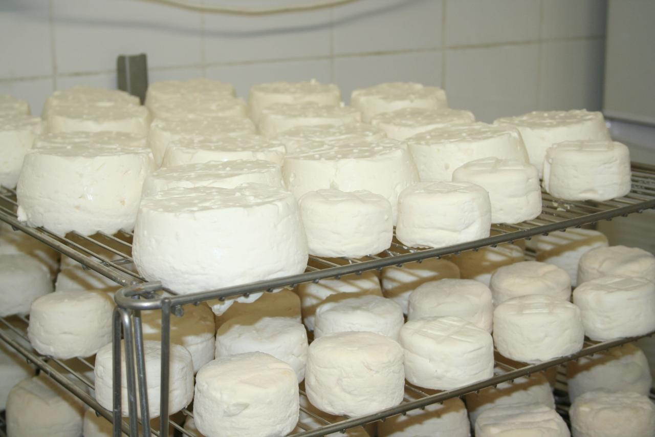 Ressuyage des fromages lactiques
